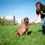Your Boyfriend's Dog Died